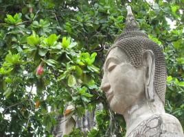 Thailandia Meditación